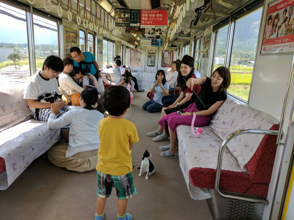 train cat cafe